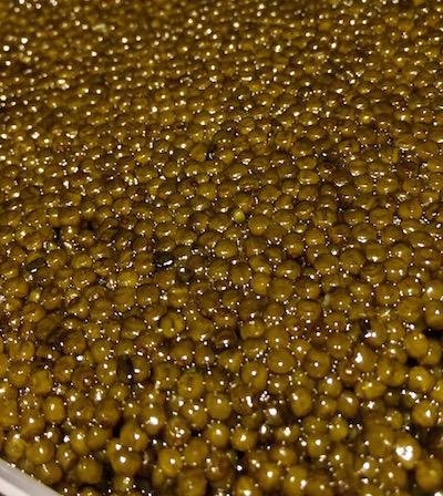 Imperial Osetra Caviar (100g - 3.5oz)